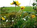 H5357 : Wild plants, Cormore by Kenneth  Allen