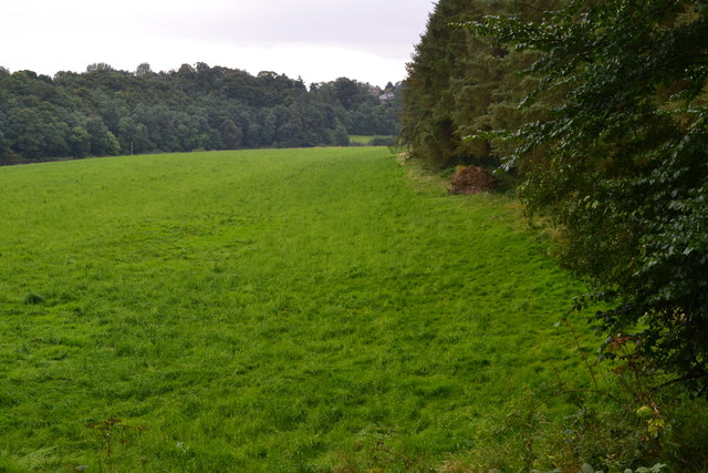 Field margin adjacent to the Union Bridge