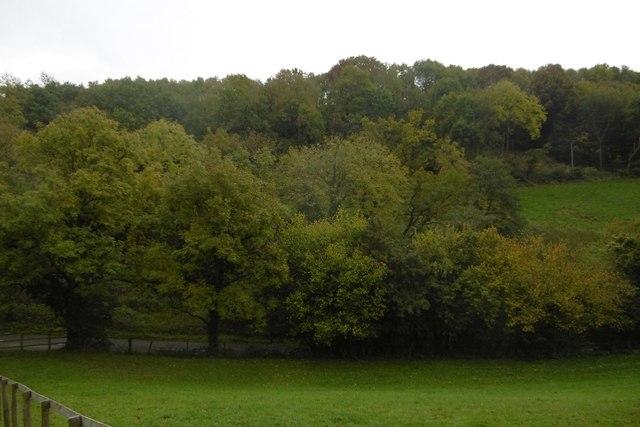 Swanpool Wood