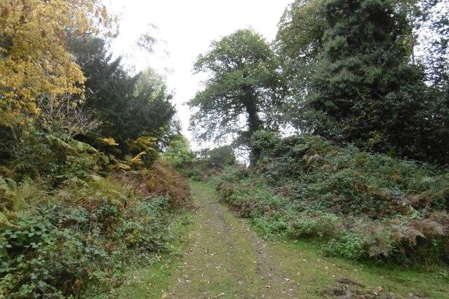 Path by Knockalls Lodge