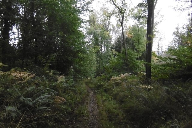 Path, Patches Wood