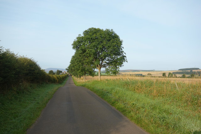 St Cuthbert's Way along the road