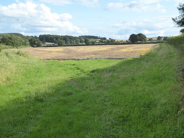 Arable field near Lower Beobridge
