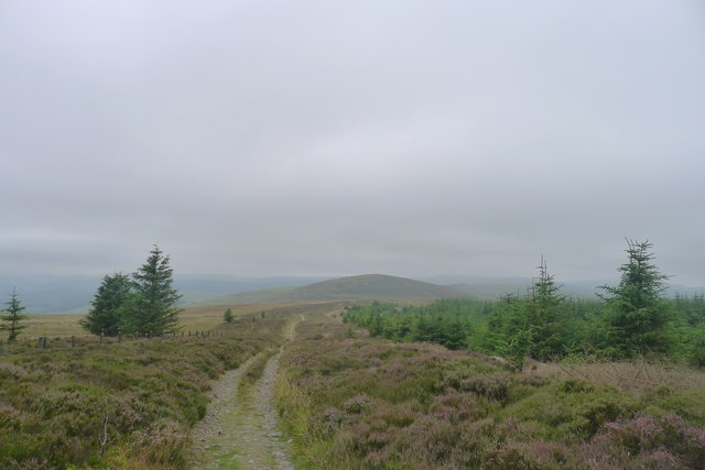 Leaving the edge of Yair Hill Forest