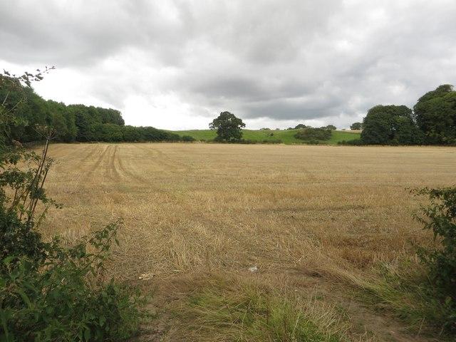Arable field east of Mill Farm