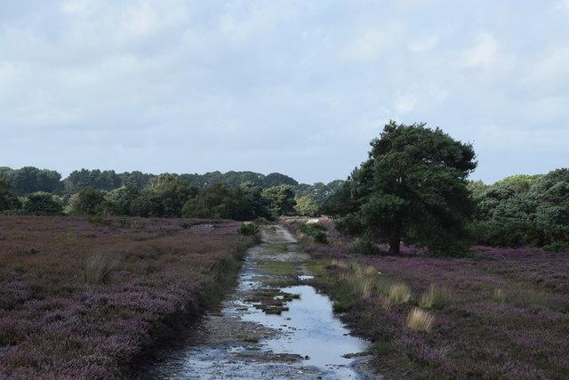 Waterlogged path on Coombe Heath