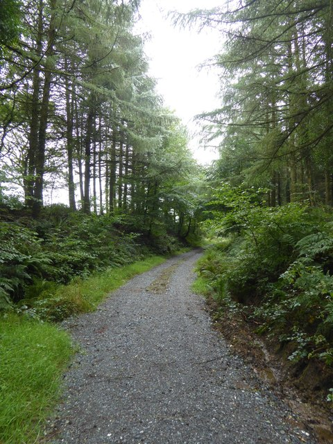 Old railway, now path, in Old Bowerland Plantation