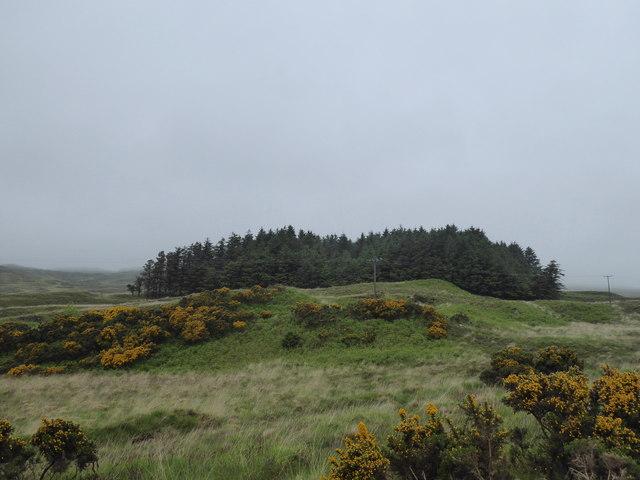 Conifer plantation north east of Kilchoan
