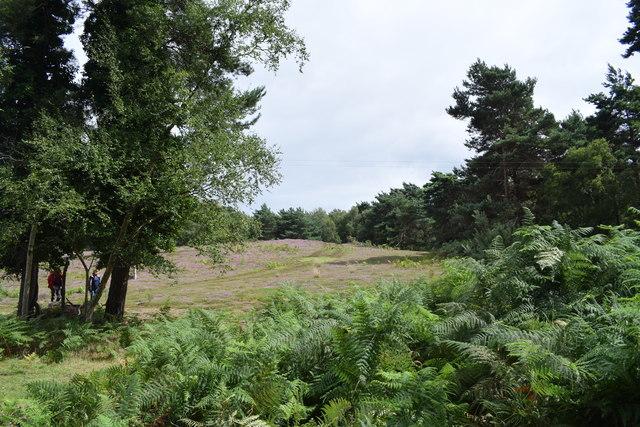 Heath, bracken and trees at Arne