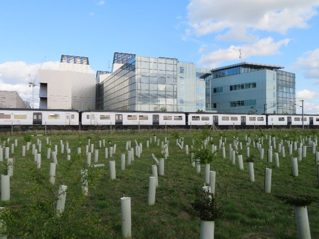 New trees by the railway