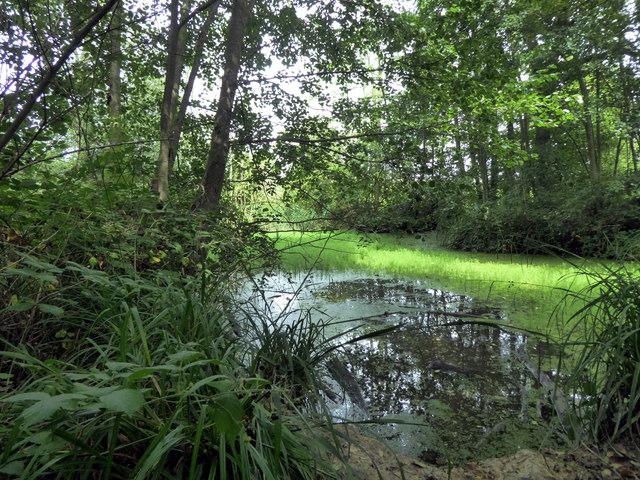Lake in Park Wood