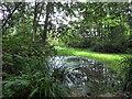 TQ5912 : Lake in Park Wood by PAUL FARMER