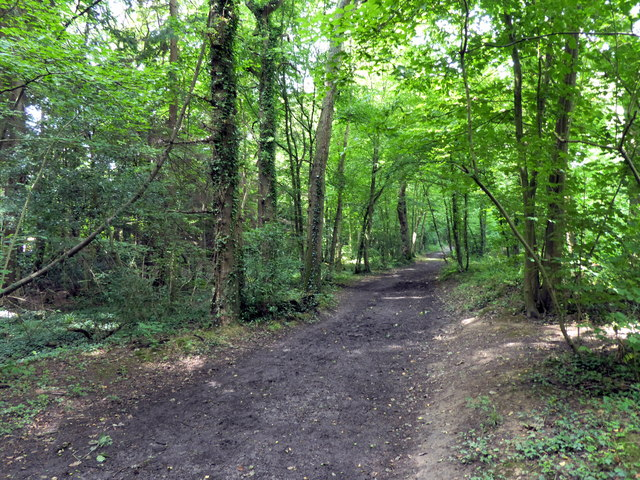 Path in Park Wood