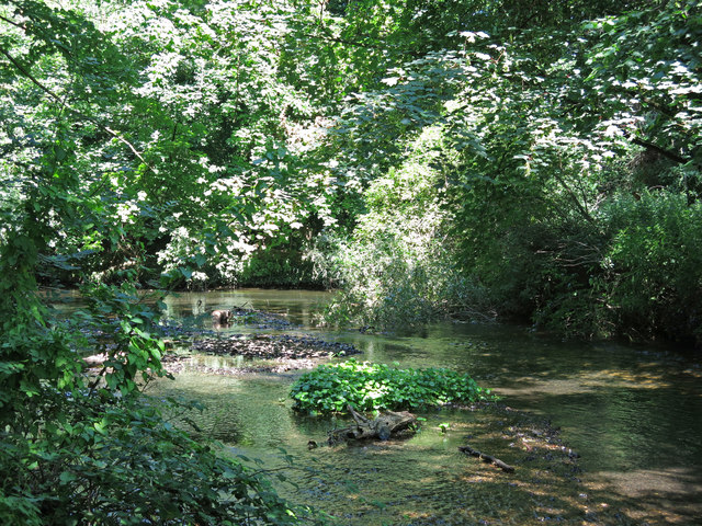 The western arm of the River Colne west of Old Mill Lane