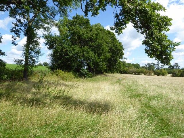 Bridleway near Warren Farm