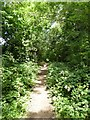 SO7843 : Footpath following old trackbed by Philip Halling