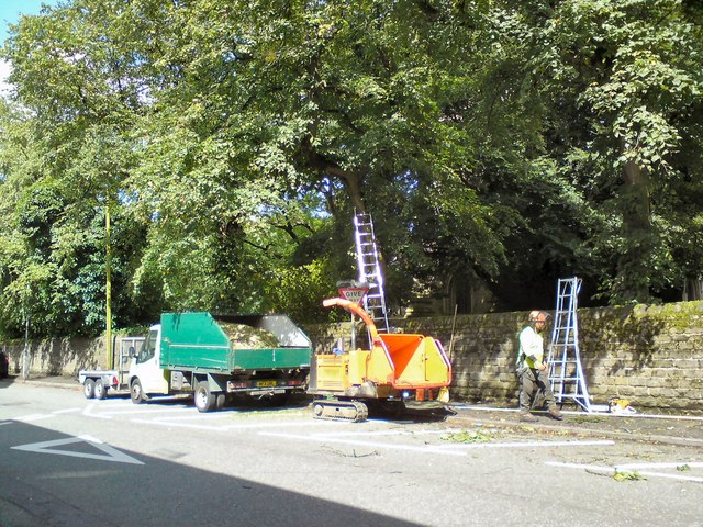 Tree surgeons on Knott Lane