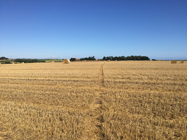 The Northumberland Coast Path crossing a newly harvested field
