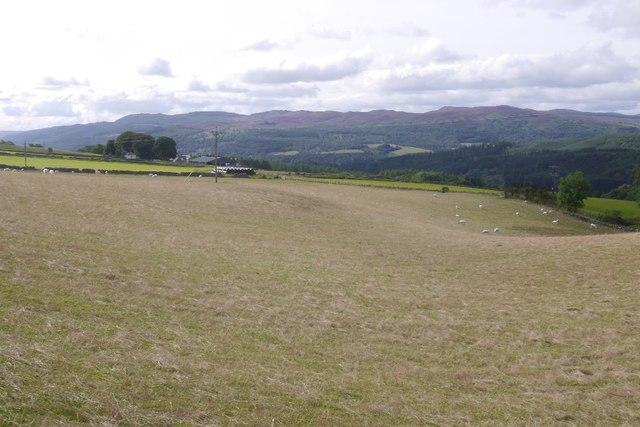 Grass field, Dalcapon