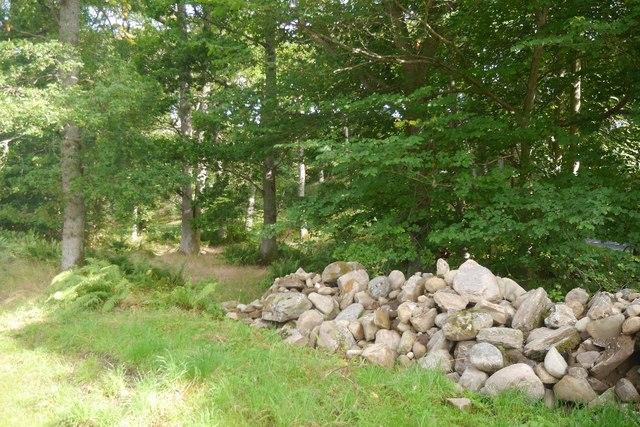 Woodland, Balchandy