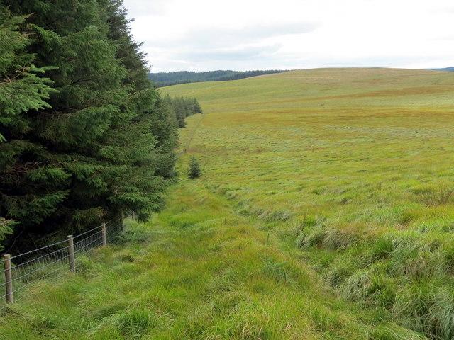 Rhostir a choedwigoedd / Moorland and forestry