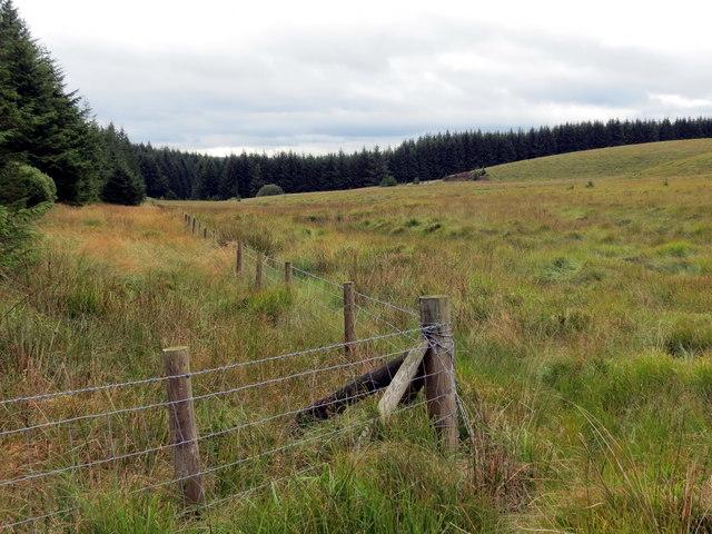 Cornel y coedwigoedd / Corner of the forestry
