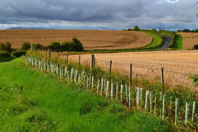 Farmland south of Norham