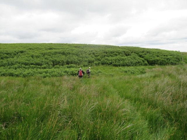 Moorland and Bracken