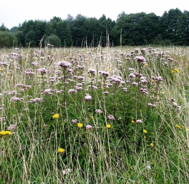 View across the marsh meadows