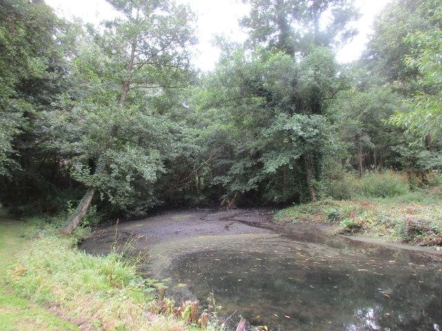 Itchenor Village Pond