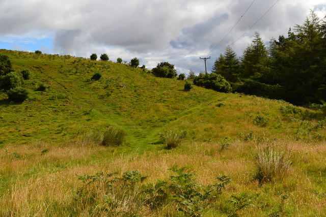 Hillside above Wooler Common woodland