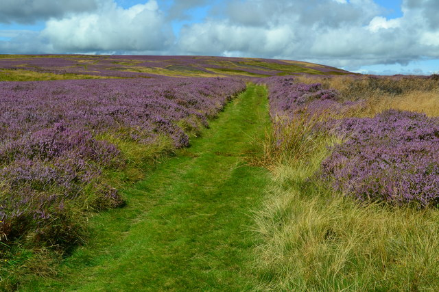 Path through heather, towards Gains Law