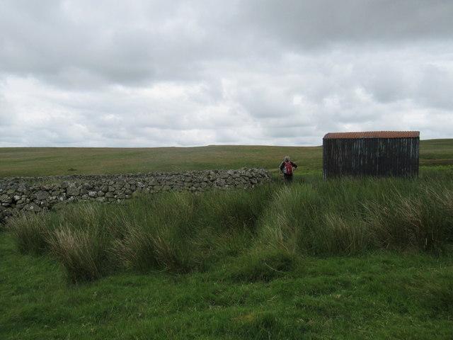 Sheepfold on Reaveley Hill