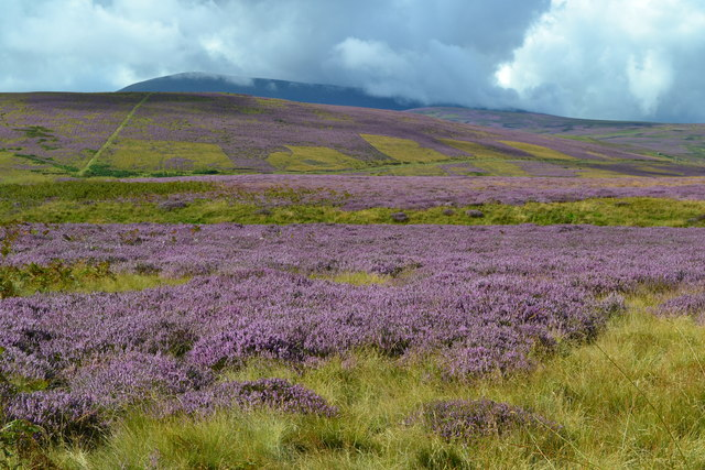 Heathland landscape, with cloud on The Cheviot