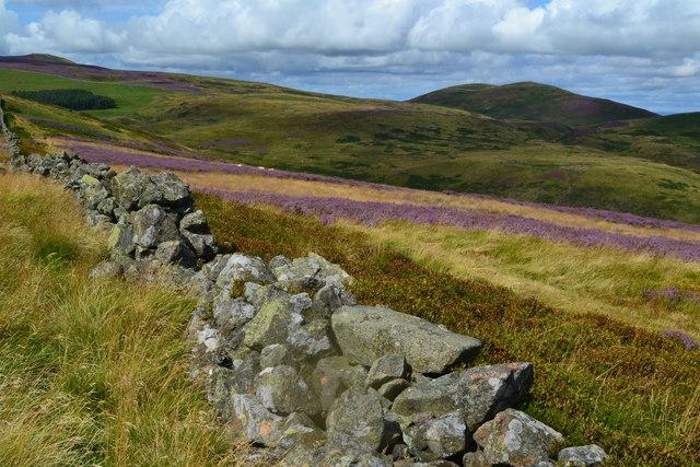 Wall and hillside above Akeld Burn