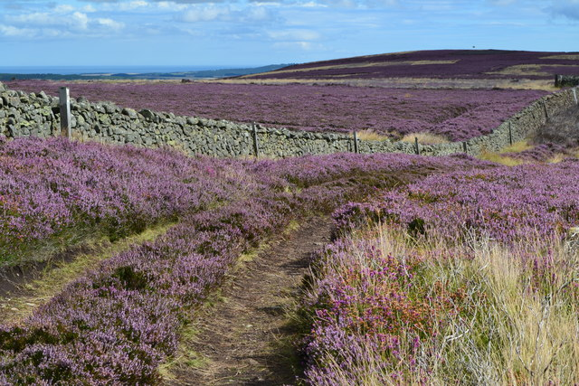 Heather and dry stone wall