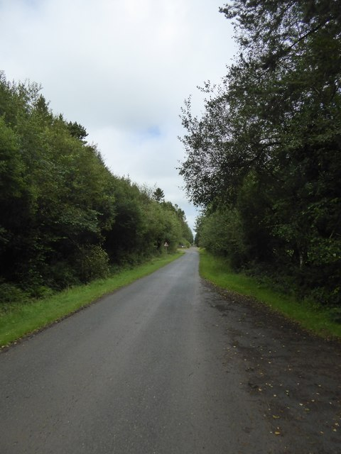 Tree-lined road on Kigbeare Common