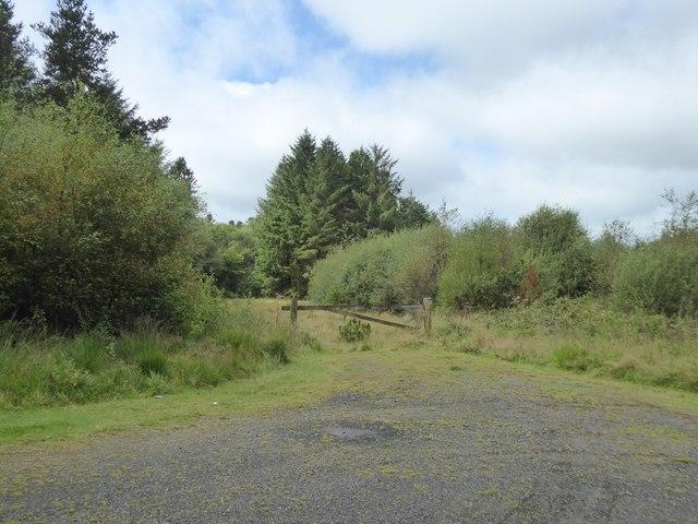 Forestry track into Ashbury Plantation