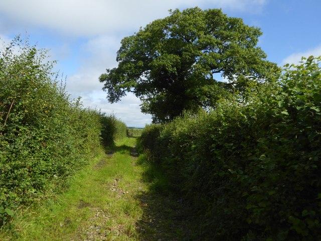 Field access track near Cruft Gate