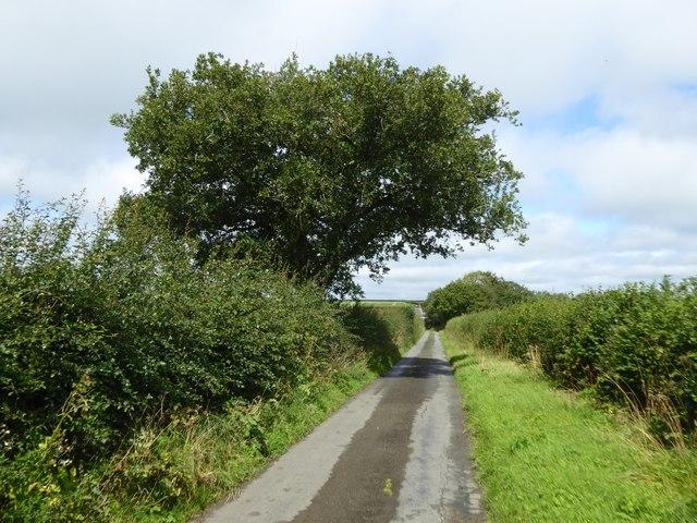 Oak south of Cruft Gate