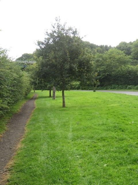 Millennium trees, Mitford