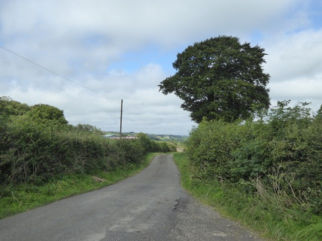 Oak by the road close to Cruft