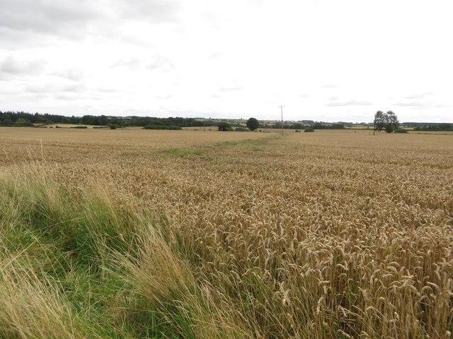 Wheat at Newton Mill