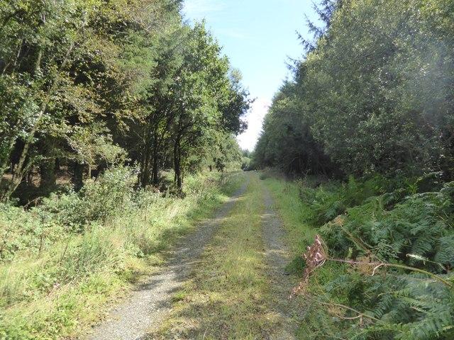 Track into South Moor Plantation