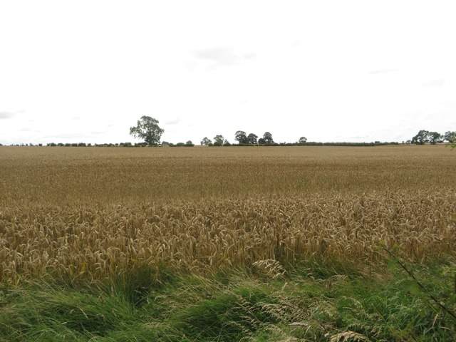 Arable land west of Quarry House