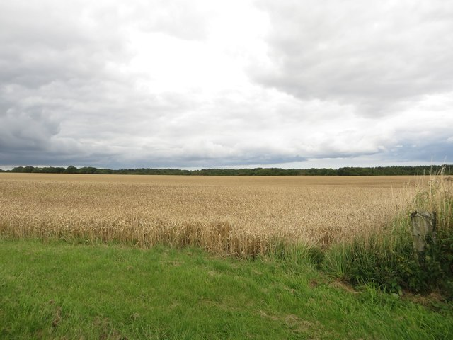 Arable field south of Nunriding Moor