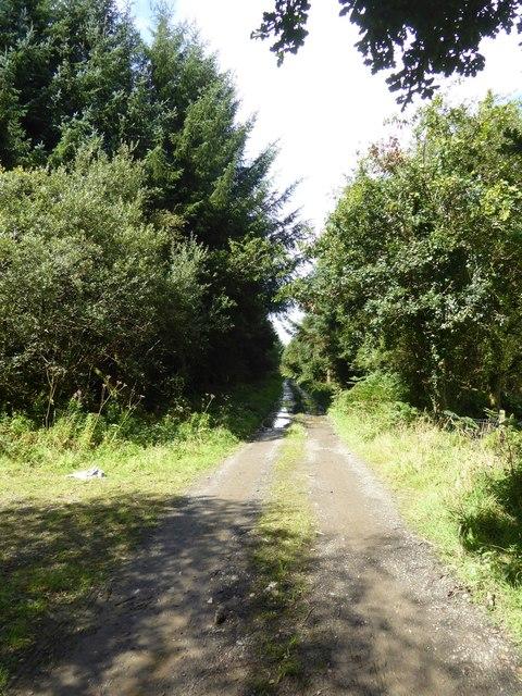 Track through South Moor Plantation