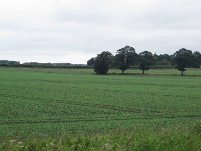 Arable land near Hall Garth