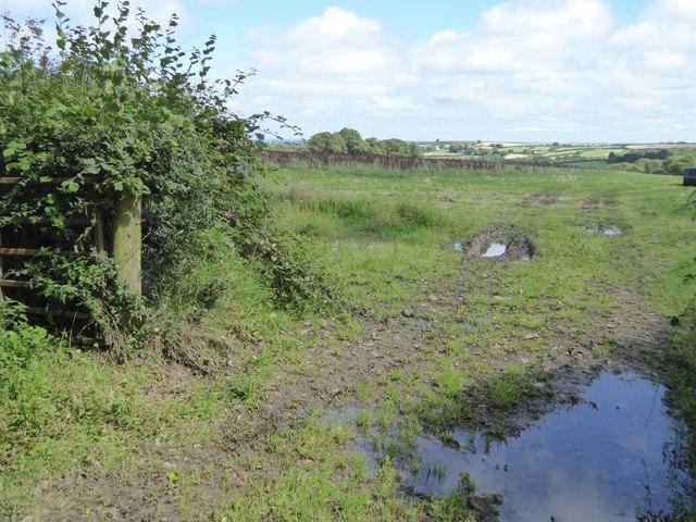 Marshy field near Higher Gorhuish