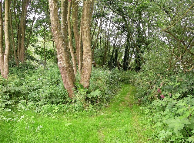 Footpath through wood by river Line, Whatlington